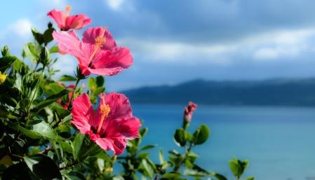 石垣島での海洋散骨